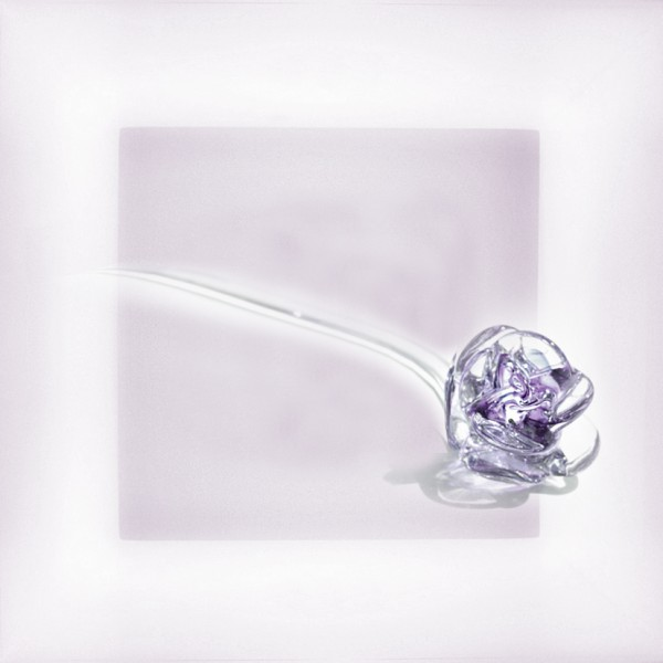"""Rose """"amethyst and white"""""""