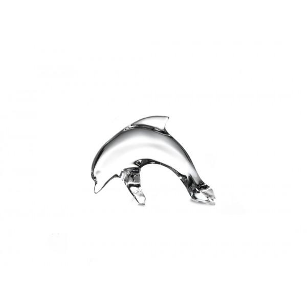 Kleine dolfijn